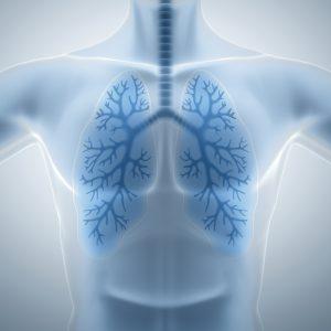 Human lungs, pulmonology